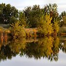 Fall by Barb Miller