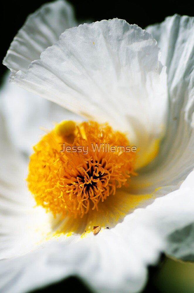 Golden Heart by Jessy Willemse