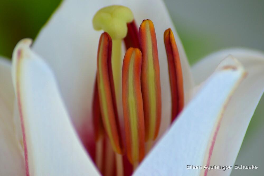 So Close I Can Smell It by Eileen Aquiningoc  Schwake