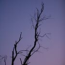 Night Silhouette by lucadou