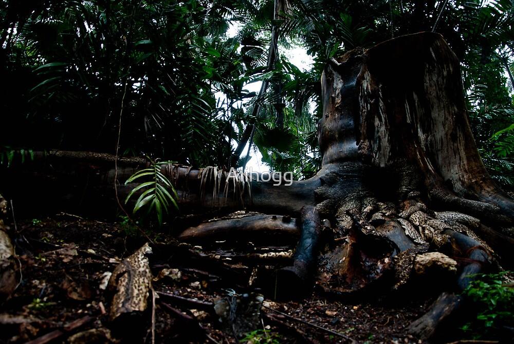 the deep dark forest by Alihogg