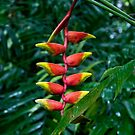 Lobster Claw Heliconium by Alihogg