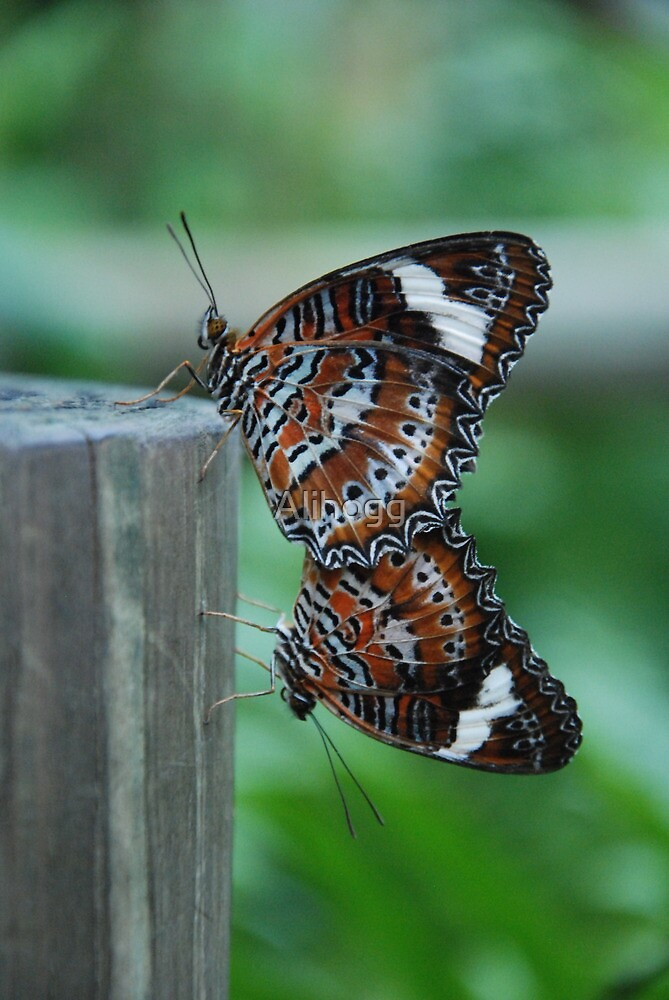 Mating Butterflies by Alihogg