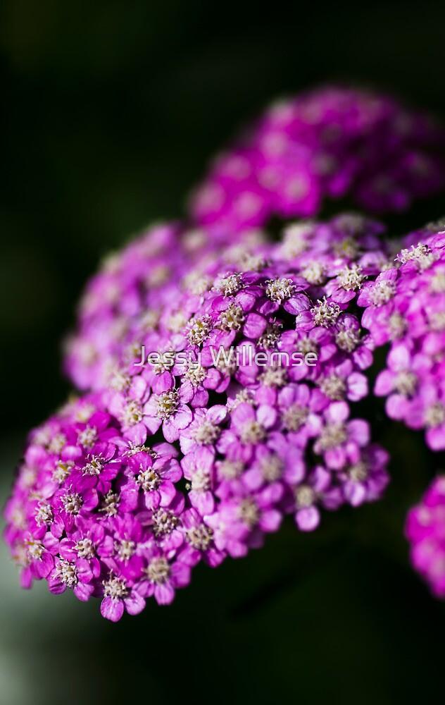 Purple bokeh by Jessy Willemse