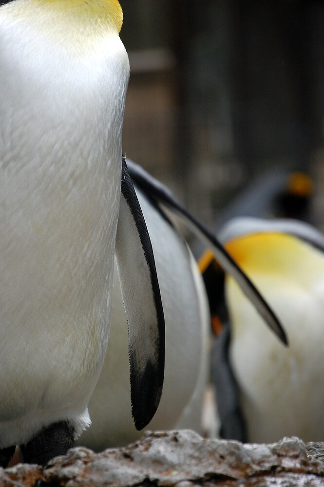 Pppickup a penguin! by Fiona Gardner