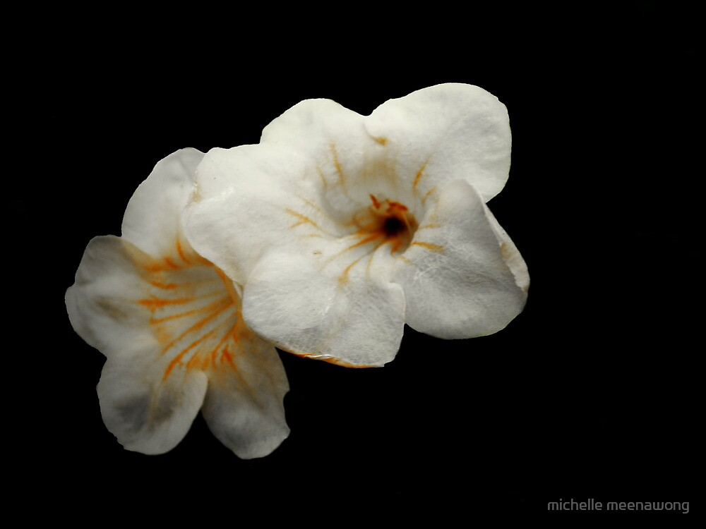 white flower on black background by michelle meenawong