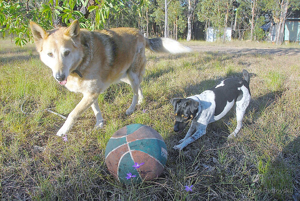 Play Ball! by George Petrovsky