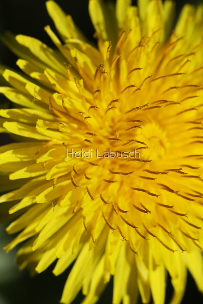 It's not just a weed... by Heidi Labusch
