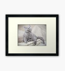 Google Framed Print