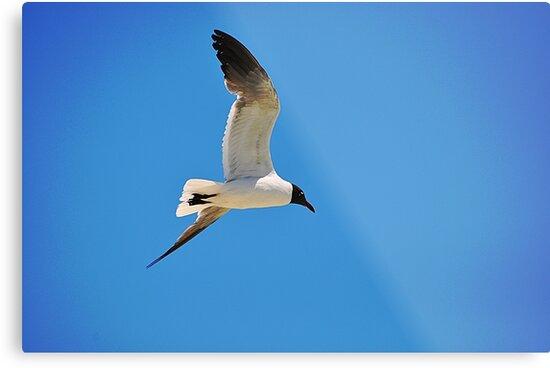 Sea Gull by joevoz