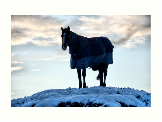 Horse on a White Hill by Paul Gibbons