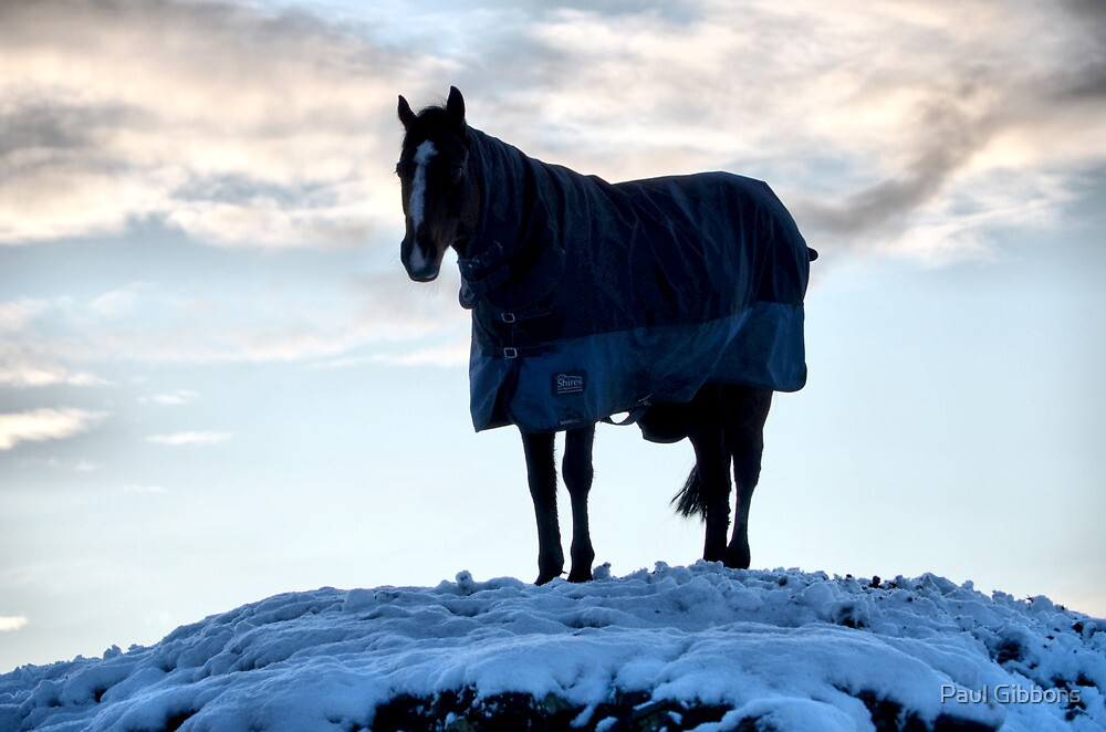 Horse on a White Hill by spottydog06