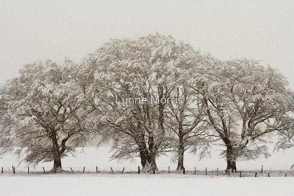 Winter Trees by Lynne Morris