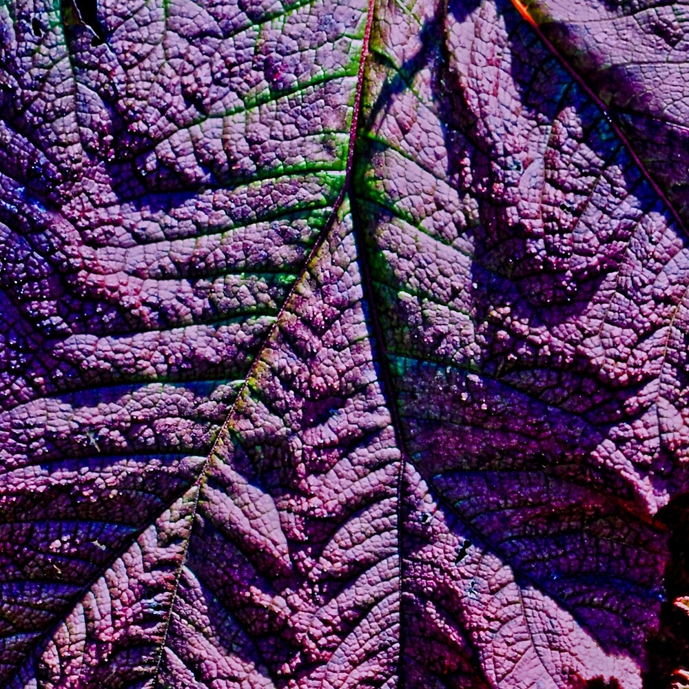 LEAF GOLDEN GATE PARK by Thomas Barker-Detwiler