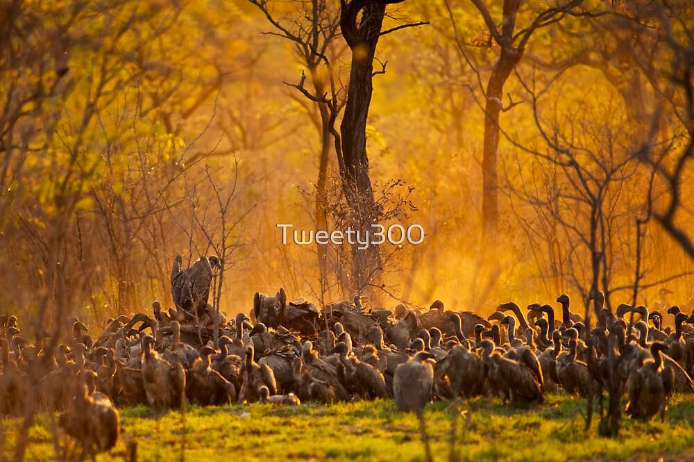 Vultures by Tweety300