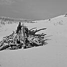 Stranded Wood by Jessica Bradford