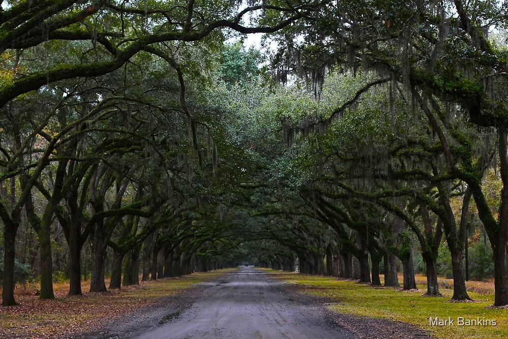 Wormsloe, Savannah, GA by Mark Bankins
