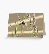 Busy Busy Busy Greeting Card