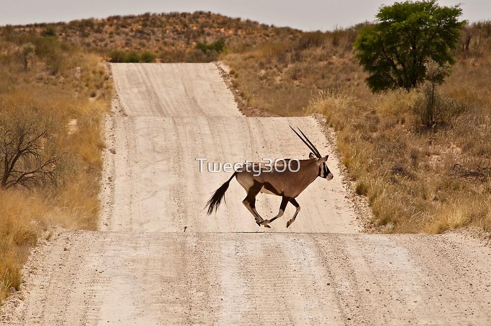 Oryx Antelope by Tweety300