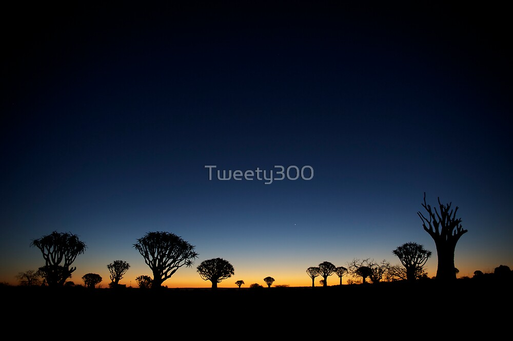 Quiver Tree Forest by Tweety300