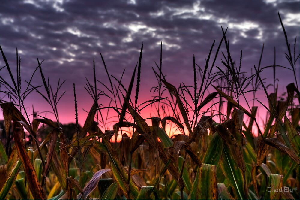 Harvest Sunrise by Chad Ely
