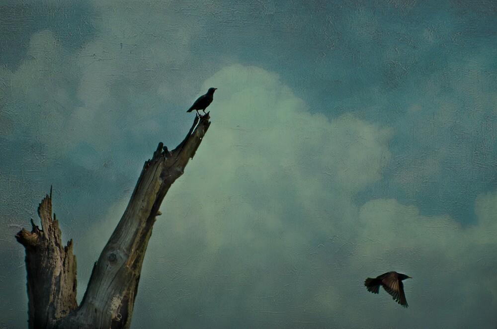 Fly Blackbird by Sherilyn Hawley