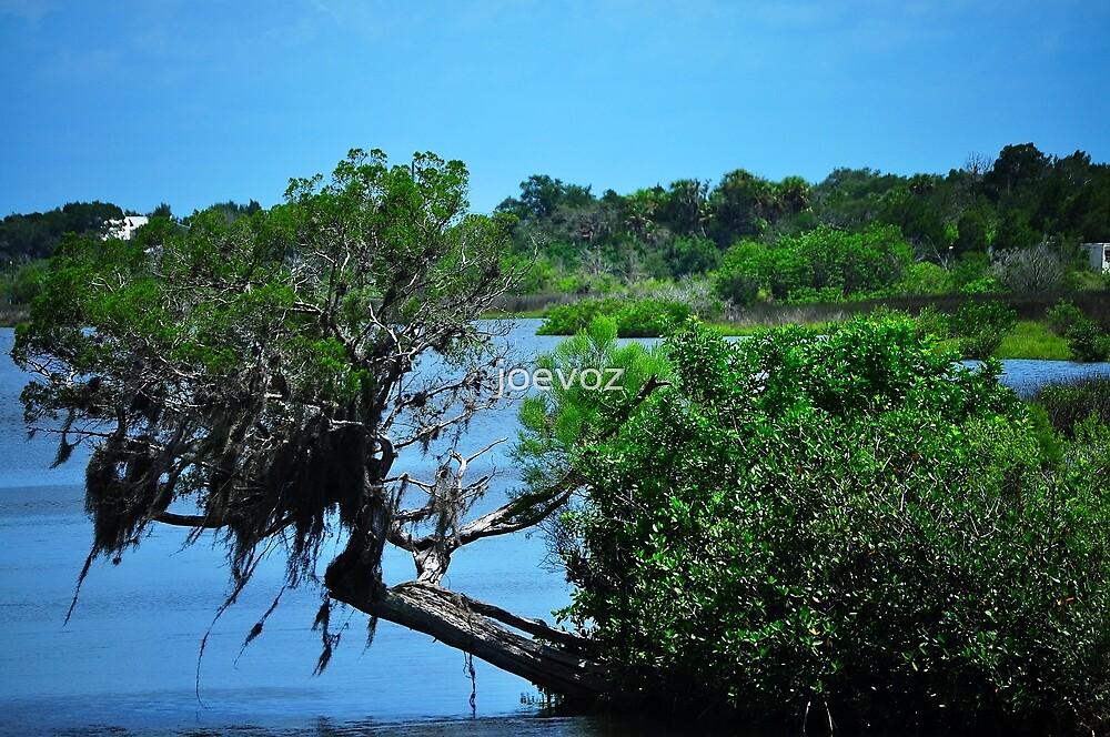 Mangrove  by joevoz