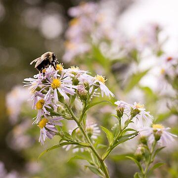 Purple Bee de AmberRoques