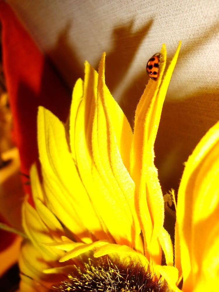 Lady Bug on Sunflower Petal by Christina Darcy