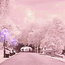 Soft Light on the Path by Zoe Marlowe