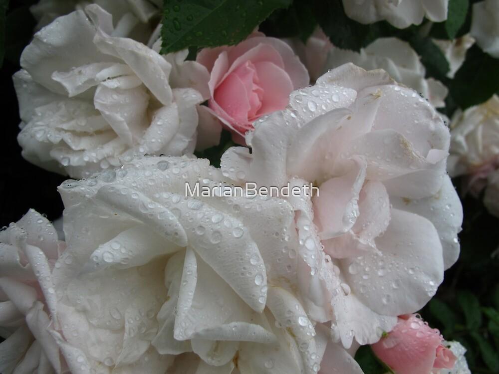 Garnering the pink by MarianBendeth