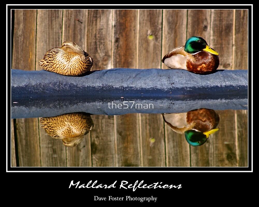 Mallard Reflections by the57man