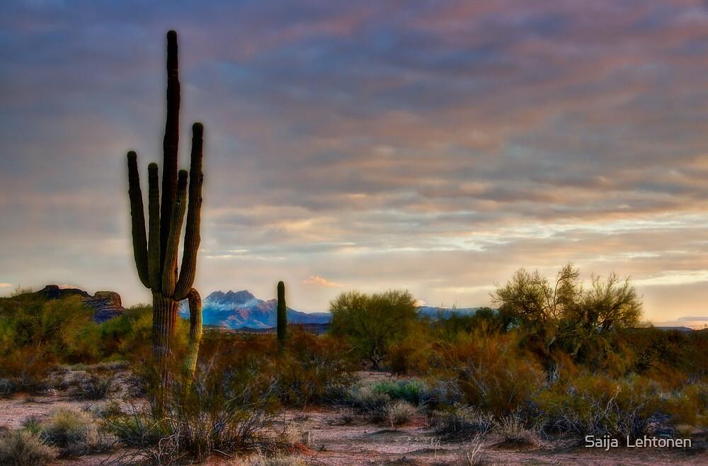A Sonoran Desert Morning  by Saija  Lehtonen