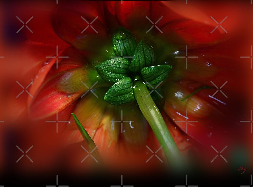 Red Dhalia by EbyArts