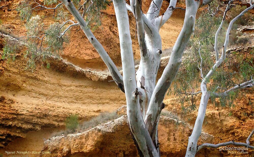 Ngaut Ngaut aboriginal site by pcbermagui