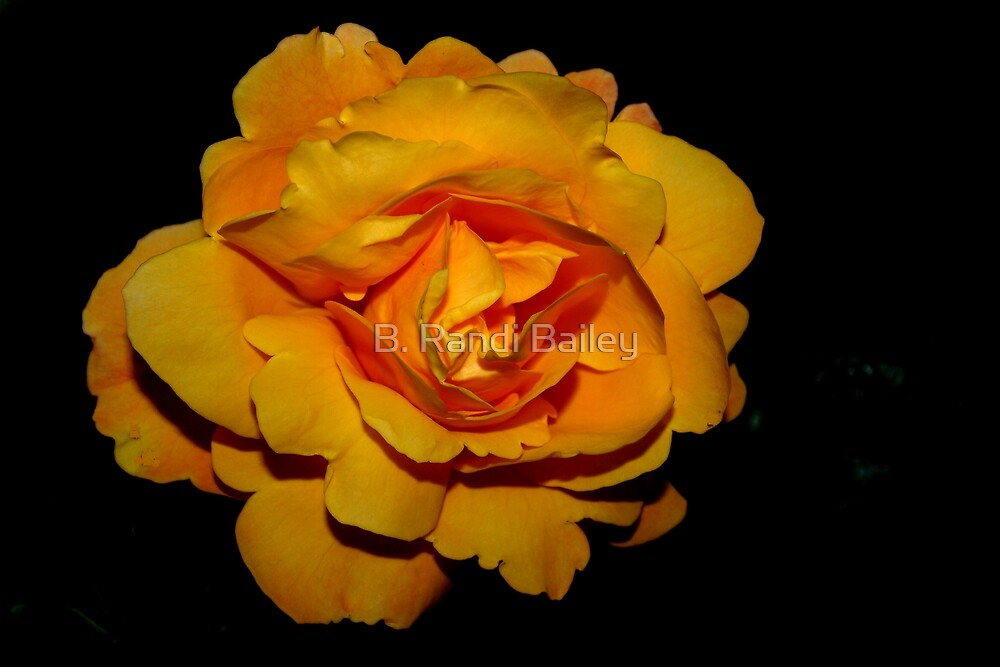 Royal gold rose by ♥⊱ B. Randi Bailey