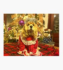Maggie Pooh Bear at Christmas Photographic Print