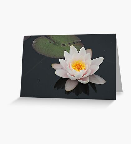 Peaceful Waterlily Greeting Card