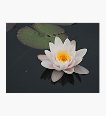 Peaceful Waterlily Photographic Print