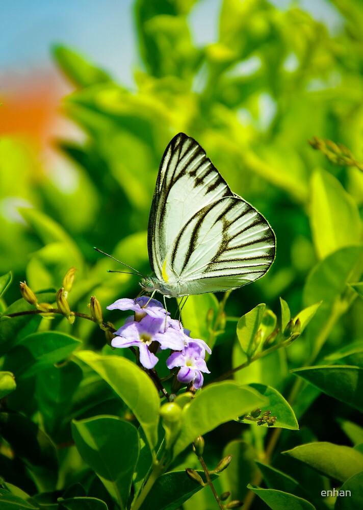 Butterfly by Van Nhan Ngo