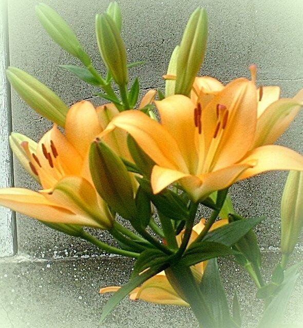 Two yellow lily by Ana Belaj