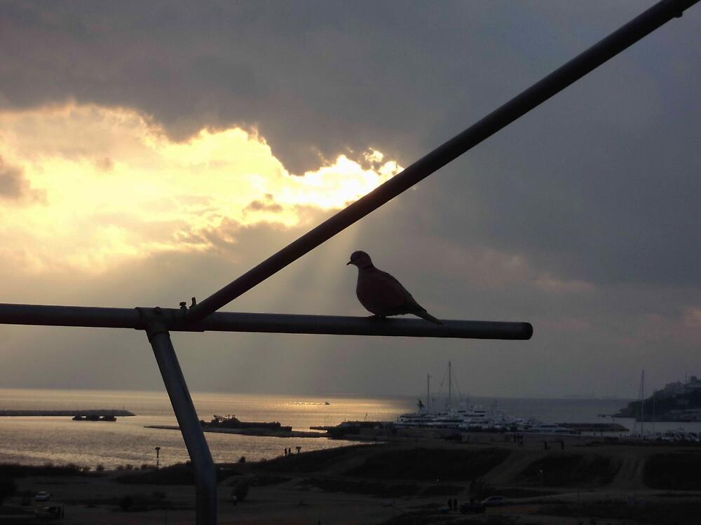 bird's eye view by gstella