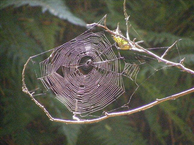 up close spider web by musebug