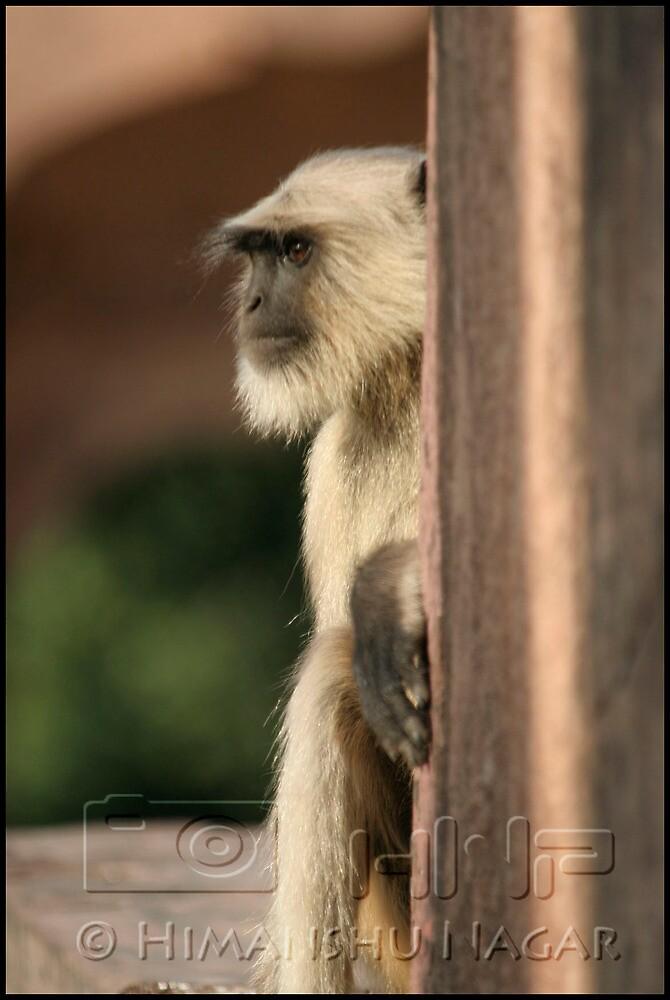 What a Pose !!! by Himanshu Nagar