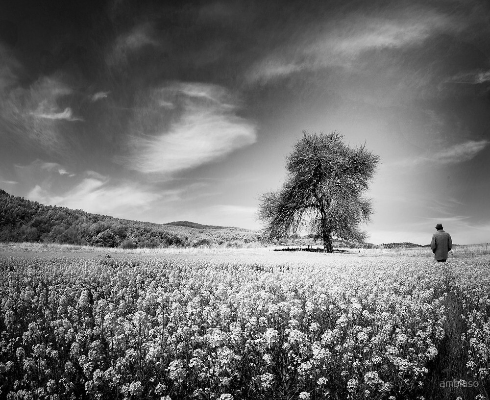 The Tree of my Memories by ambiaso