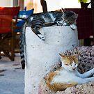 Cat Nap by Mariano57