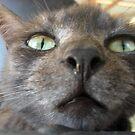 Tigga the Cat 6 by Jindia