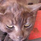 Tigga the Cat 7 by Jindia