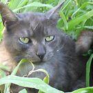 Tigga the Cat 9 by Jindia
