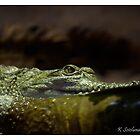 Crocodylus johnstoni by bluetaipan